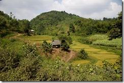 Dans la region de Hoa Bin