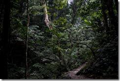 Vers l'arbre centenaire