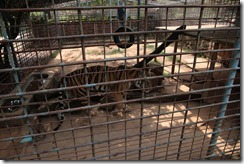 0011 - Zoo, environs Kampot