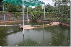 0012 - Zoo, environs Kampot