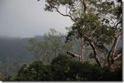 0025 - Toucan, Phnum Bokor national parc, environs Kampot