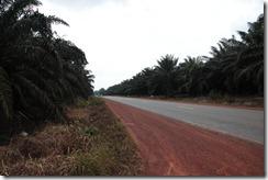 0075 - Plantations de palmiers, Route 3, Kampot vers Chi Pat