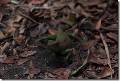 0095 - Lezard, Trekking 2D-1N dans la jungle, Chi Pat