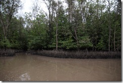 1484 - Des chemins partout, Tour en bateau dans les marais, Environs Nam Can, Environs Ca Mau