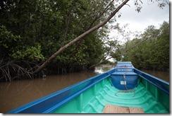 1485 - Mangrove, Tour en bateau dans les marais, Environs Nam Can, Environs Ca Mau