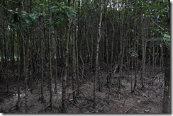 1493 - Mui Ca Mau, Tour en bateau dans les marais, Environs Nam Can, Environs Ca Mau