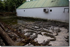 1518 - Ferme de crocodiles, Environs Long Xueyn