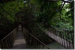 Pont de liane et cabane