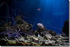 Aquarium du musée oceanigraphique