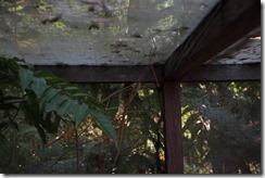 0192 - Pharme, Butterfly center, Environs Siem Reap