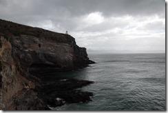 0483 - Environs royal albatross colony, environ Potorbello