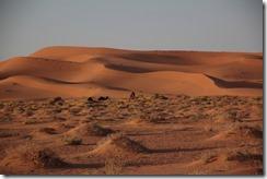 0215 - Chameau et dune de sable, SudSudEst, Merzouga