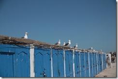 0587 - Cabines bleus, Port de pêche, Essaouira