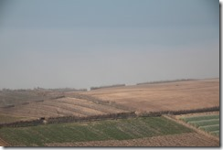 0592 - Champs dans le brouillard, Nord Safi, R301, Essaouira vers Casablanca