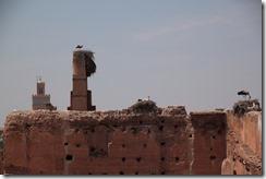 0620 - Cigognes, Palais de la Bahia, Marrakech