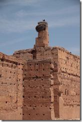 0621 - Cigogne, Palais de la Bahia, Marrakech