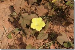 0244 - Pak Beng vers Houay Xai, Proximitéé Houay Xai, Fleur jaune