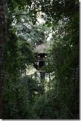 0258 - Houay Xai, Gibbon Experience, Treehouse 7, Extérieurr