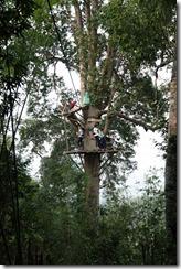 0302 - Houay Xai, Gibbon Experience, Echangeur de zipline