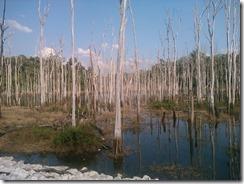 0417 - Ban Nahin vers Thalang, Proximité Thalang, Arbres morts dans le lac